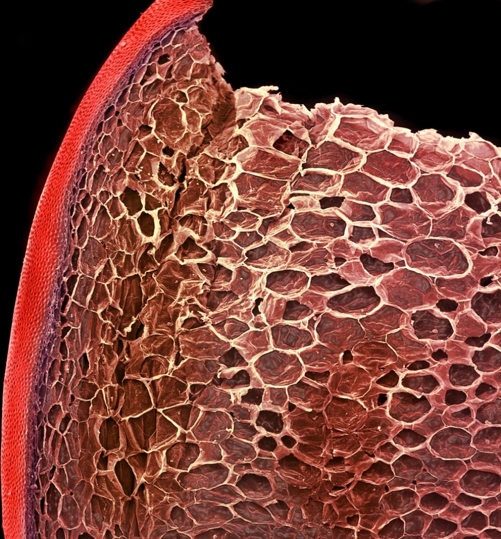 1449505-1000-1461218691-mikroskops-18