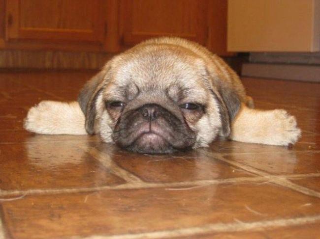 1877855-650-1463465193-sleepy-dog10