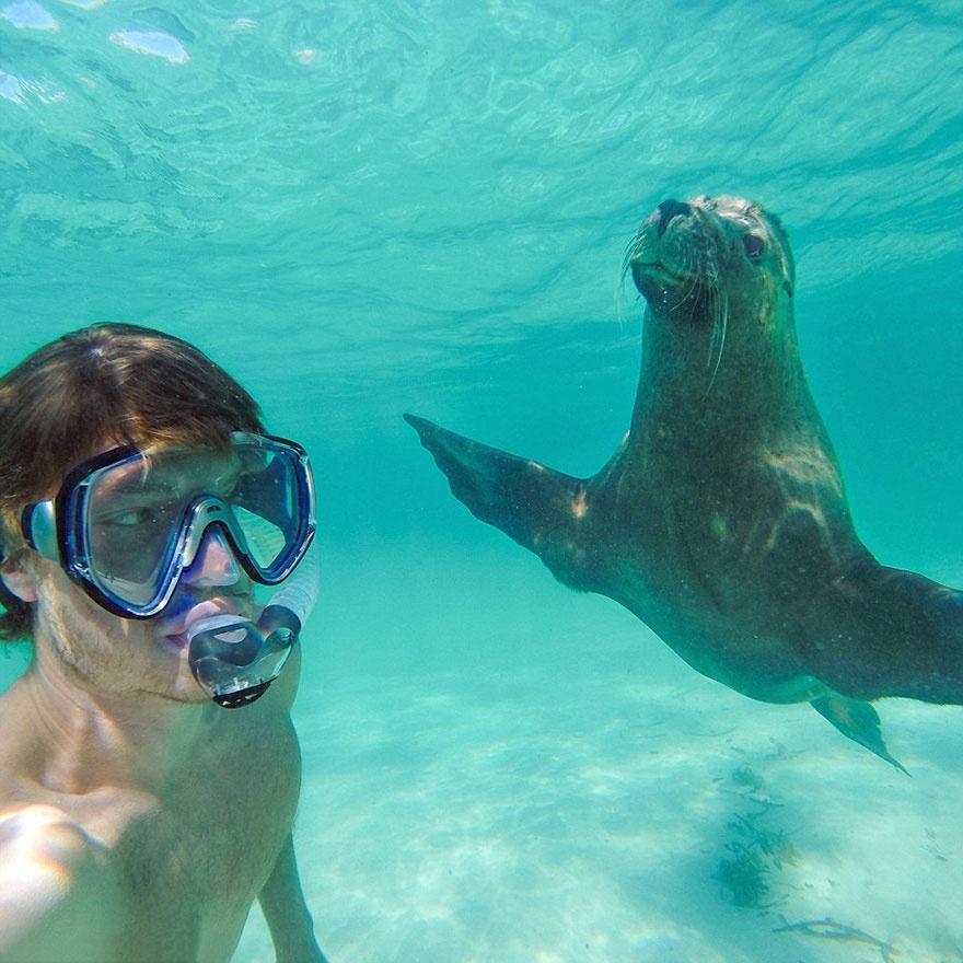 179155-funny-animal-selfies-allan-dixon-10-880-a542d8629a-1478517753