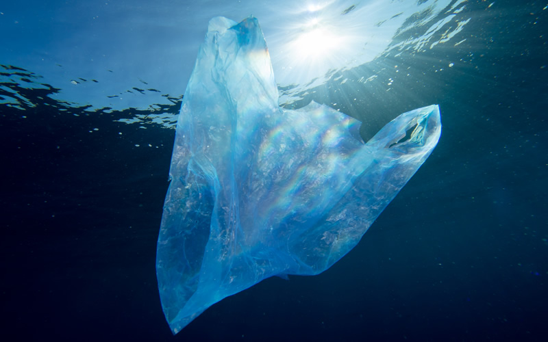 why-plastic-bags-should-be-banned